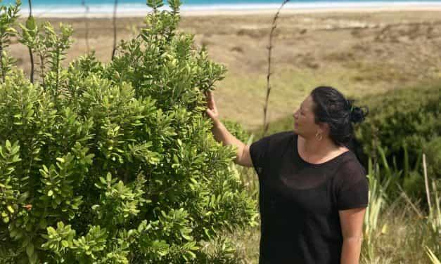 Ngāti Kuri takes flight