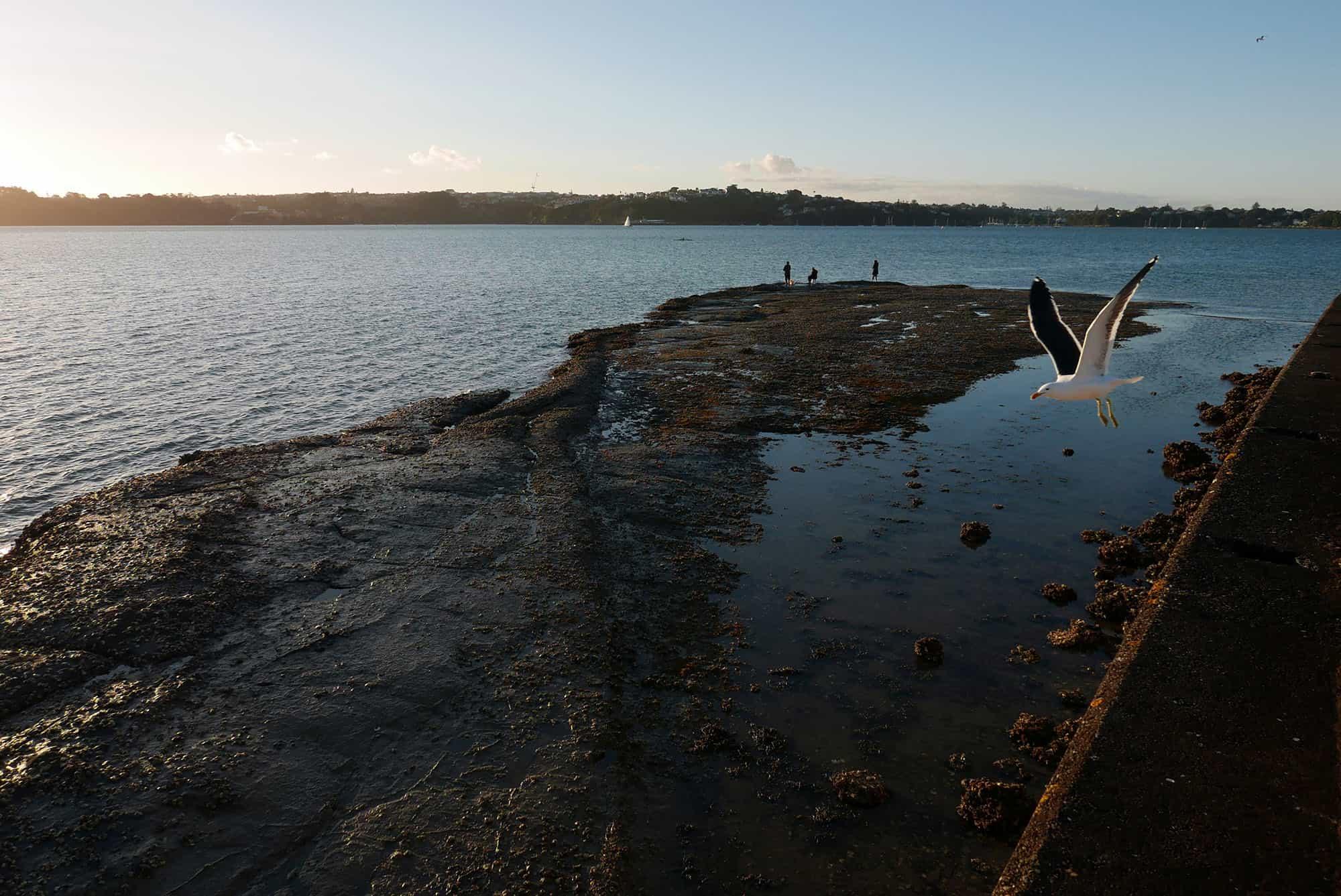 Te Routu o Ureia, visible at low tide.